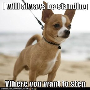 I will always be standing  Where you want to step