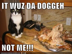IT WUZ DA DOGGEH  NOT ME!!!