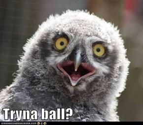Tryna ball?