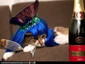 16 Pets Celebrating the Arrival of 2012