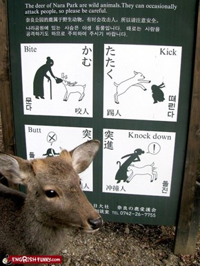 Engrish Funny: They will eat your face off if you're not careful