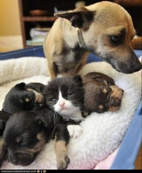 Funny Pictures - Cats and Dogs Are Friends