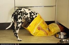 Goggie ob teh Week: Nope.. Still Hungries!