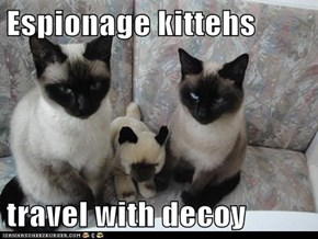 Espionage kittehs  travel with decoy
