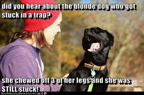 did you hear about the blonde dog who got stuck in a trap?  she chewed off 3 of her legs and she was STILL stuck!
