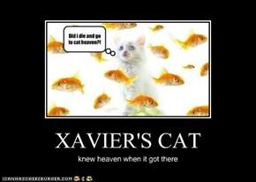 XAVIER'S CAT