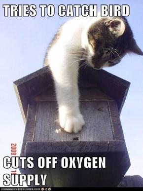TRIES TO CATCH BIRD  CUTS OFF OXYGEN SUPPLY