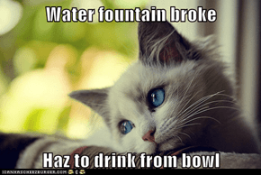Water fountain broke  Haz to drink from bowl
