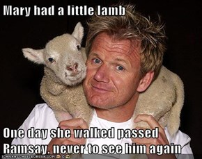 Mary had a little lamb  One day she walked passed Ramsay, never to see him again