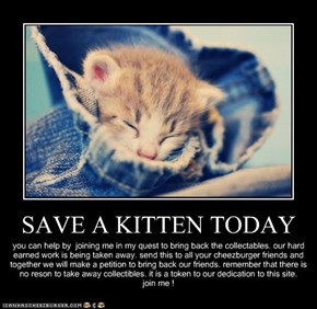 SAVE A KITTEN TODAY