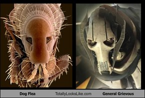 Dog Flea Totally Looks Like General Grievous
