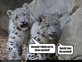 George! I think we've been spotted!