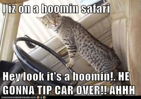 I iz on a hoomin safari  Hey look it's a hoomin!. HE GONNA TIP CAR OVER!! AHHH