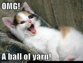 OMG!  A ball of yarn!