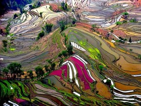 Rice Terraces, Yunnan Province, China