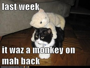 last week  it waz a monkey on mah back