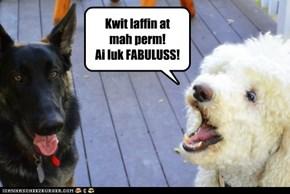 Kwit laffin at mah perm!Ai luk FABULUSS!