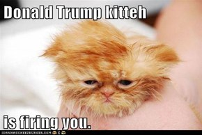 Donald Trump kitteh  is firing you.
