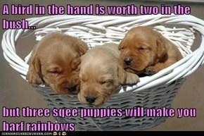 A bird in the hand is worth two in the bush...  but three sqee puppies will make you barf rainbows