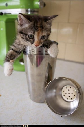 Cyoot Kitteh of teh Day: Shaken, Not Purred