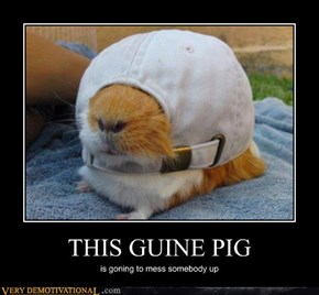 THIS GUINE PIG