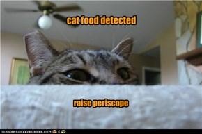 cat food detected