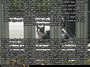 Update On Teh Feral Kittehs