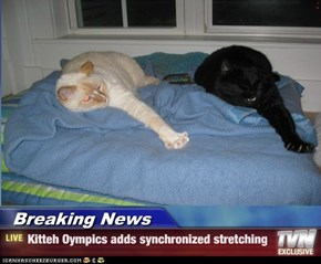 Breaking News - Kitteh Oympics adds synchronized stretching