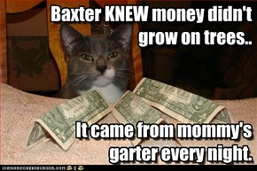 Baxter KNEW money didn't grow on trees.. It came from mommy's garter every night.