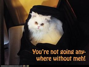 Travel kitty