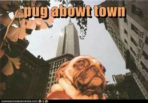 pug abowt town