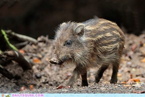 Creepicute: Wild Boar Piglet