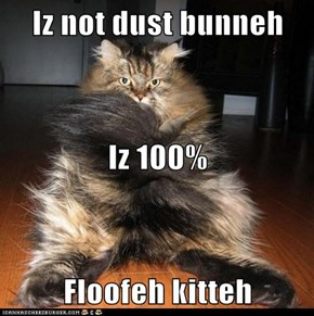 Iz not dust bunneh Iz 100% Floofeh kitteh