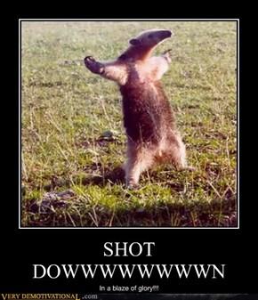 SHOT DOWWWWWWWWN