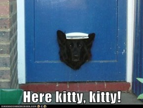 Here kitty, kitty!