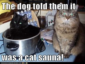 The dog told them it   was a cat sauna!