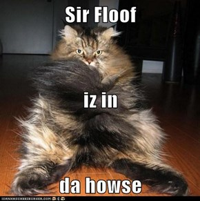 Sir Floof iz in da howse