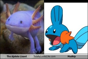 The Ajolote Lizard Totally Looks Like Mudkip