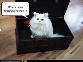 Where's my trearure hoomin ?!