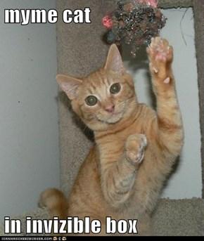 myme cat  in invizible box