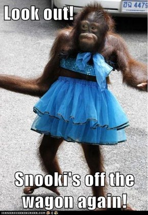 Look out!  Snooki's off the wagon again!