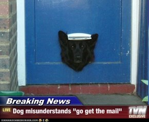"Breaking News - Dog misunderstands ""go get the mail"""
