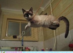 Acting Like Animals: Um... I'm An Acrobat?