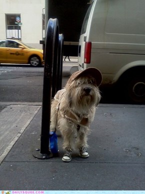 Acting Like Animals: This Dog is Rocking Chuck Taylors
