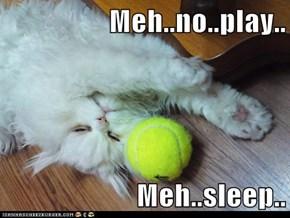 Meh..no..play..  Meh..sleep..