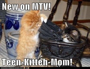 New on MTV!  Teen-Kitteh-Mom!