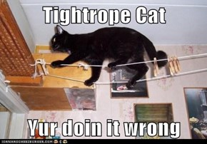 Tightrope Cat  Yur doin it wrong