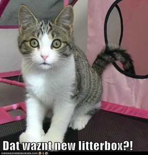 Dat waznt new litterbox?!
