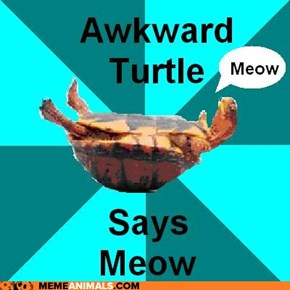 "Awkward Turtle Says ""Meow"""