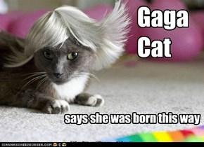 Gaga Cat